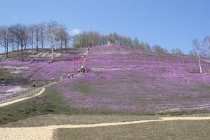 ひがし藻琴芝桜公園の芝桜