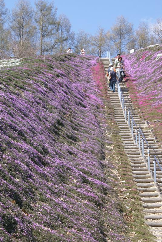 ひがし藻琴芝桜公園