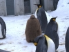 ペンギンの子供2